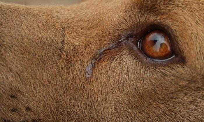 Norfolk: Dog 'Cries' Every Night While She Awaits Adoption, Shelter Shares Sad Photo As Last Hope